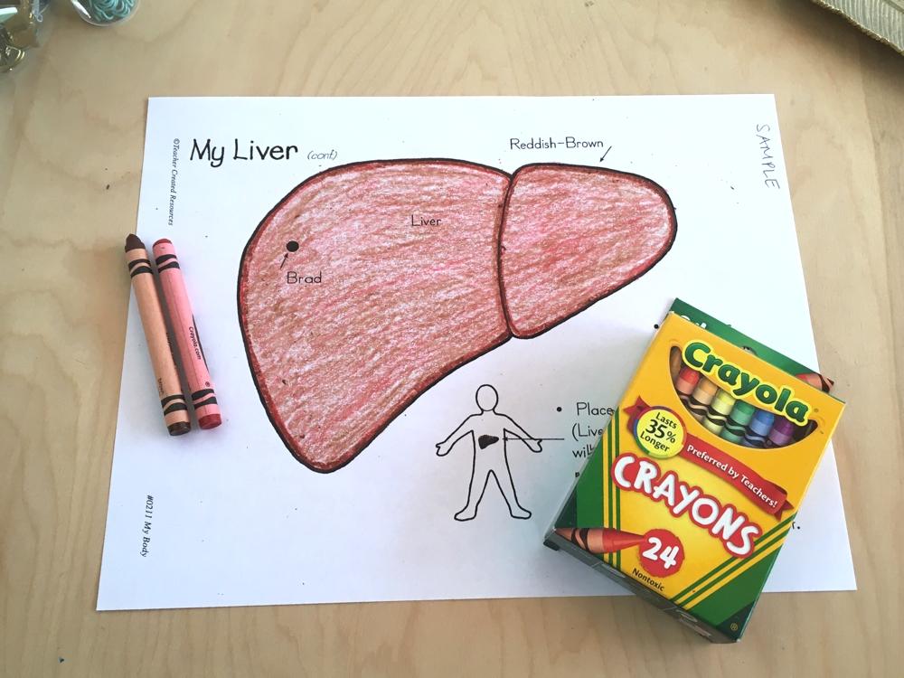 Homeschool anatomy