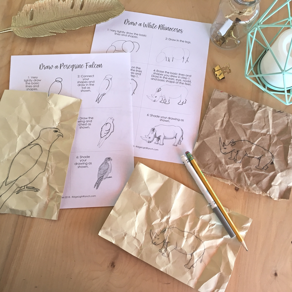 Lines And Shapes In Prehistoric Art C1w1 Lesson Plan