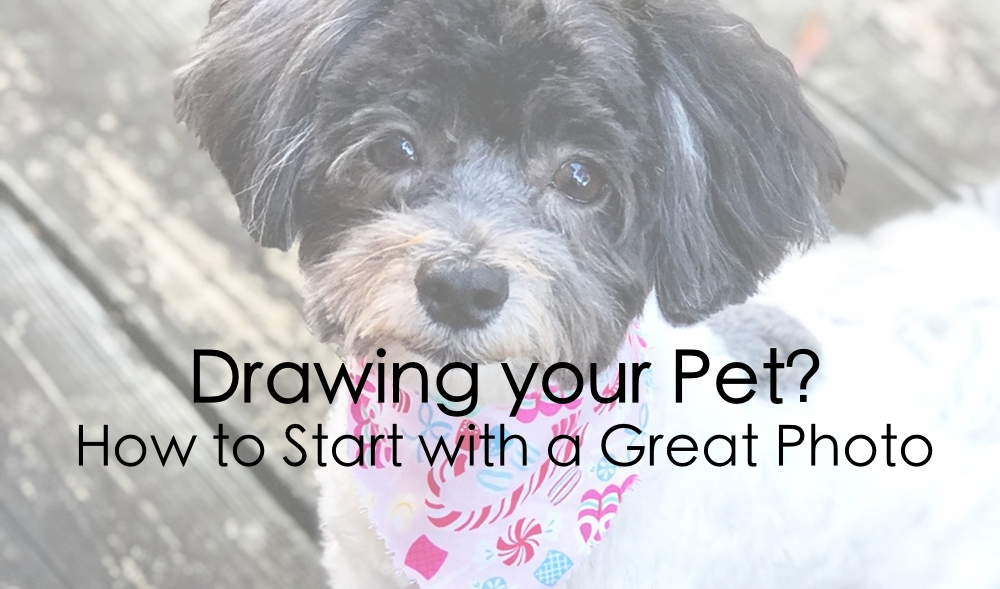 Drawing a Pet? Start with a Great Photo!